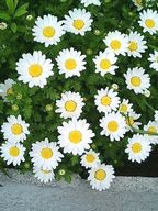 Flower1_2